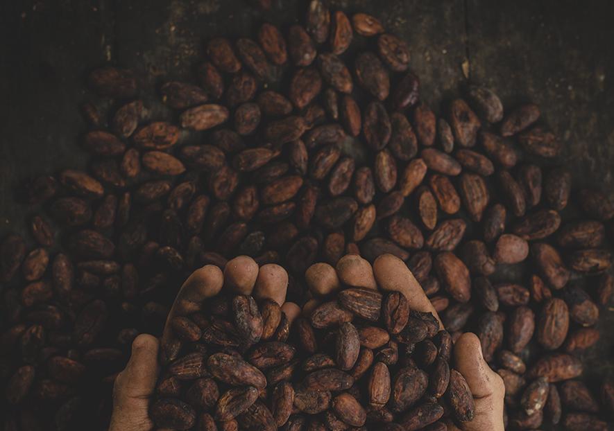 Chocolate de comercio justo de vending